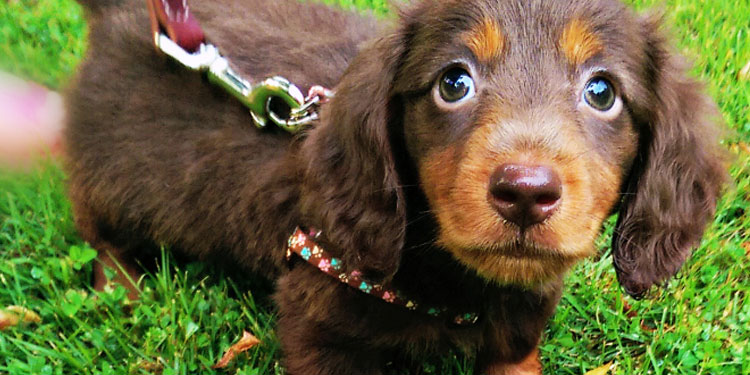 6 Tips for Introducing Your Child to a Dog 1