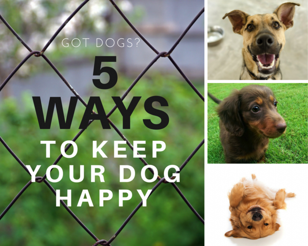 5 Ways to Keep Your Dog Happy Cesar Home Delights