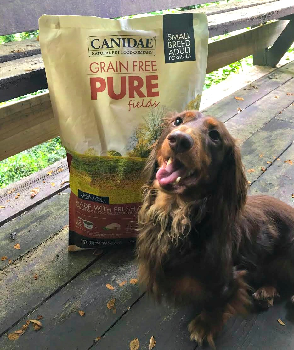 CANIDAE Grain Free PURE Fields Small Breed Dog Formula