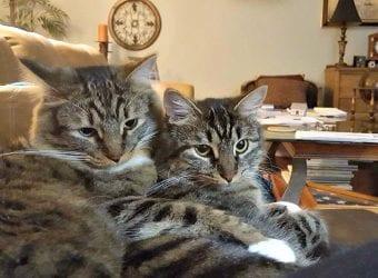 Cats 3