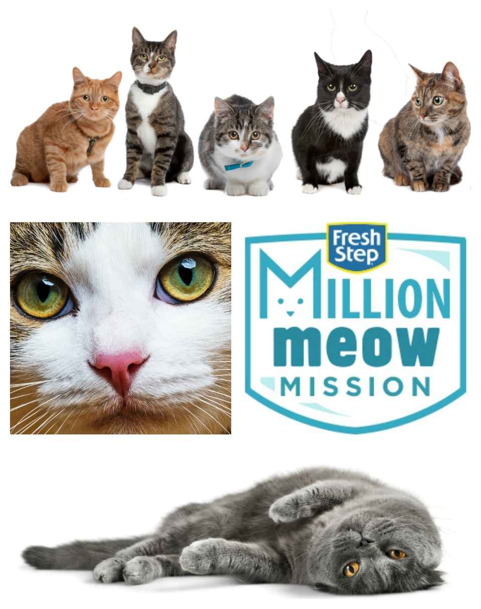 June is Adopt a Shelter Cat Month Fresh Step Million Meow Mission