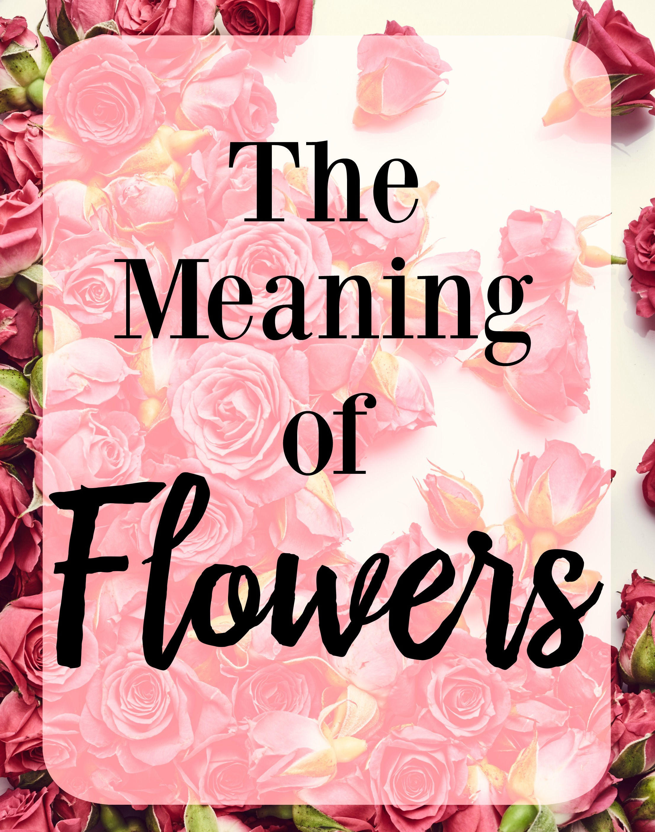 The Meaning of Flowers Roses Tulips Divine Lifestyle