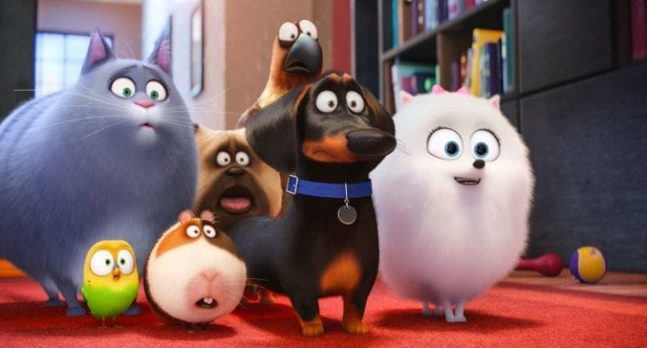 The Secret Life of Pets' coming to DVD + Blu-ray #TheSecretLifeOfPets #PetsPack