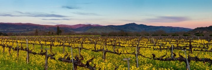 5 Must Visit Wineries Napa Valley California