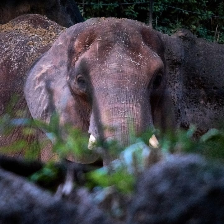 Zoo Atlanta's Twilight Trek 8