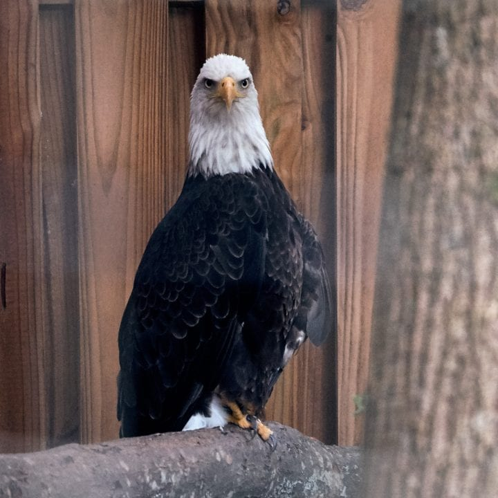 Zoo Atlanta's Twilight Trek 9