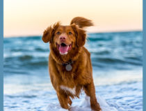 How to Choose the Right Type of Nutrition for Your Pet