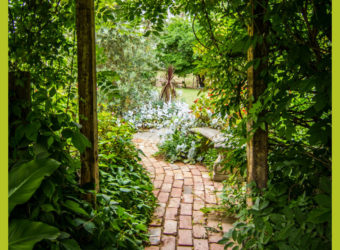 Making Your Ideal Garden This Summer